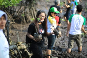 Mangrove Planting by Corporate Group (CSR activities)